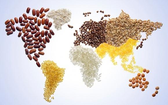 Европейские селекционные компании укрепили позиции на рынке семян Украины фото, иллюстрация