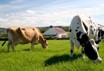 МинАПК поможет фермерам формировать конкурентные ниши фото, иллюстрация
