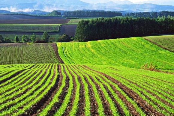 Информация о национальной оценке земли будет сведена в единый геопортал фото, иллюстрация