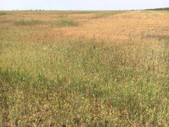 Збитки аграріїв через посуху оцінюють в 15 млрд грн фото, ілюстрація