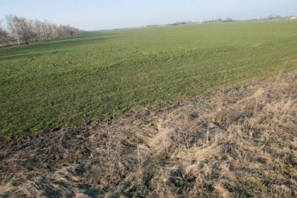 На Одесщине фермер потерял из-за засухи весь урожай и покончил жизнь самоубийством фото, иллюстрация