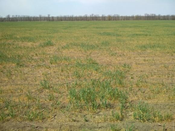 В Минэкономразвития отреагировали на суицид фермера в Одесской области фото, иллюстрация