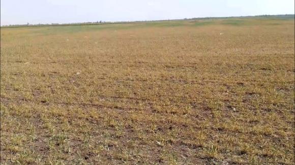 Глава Одесской области просит от правительства помощи из-за засухи фото, иллюстрация