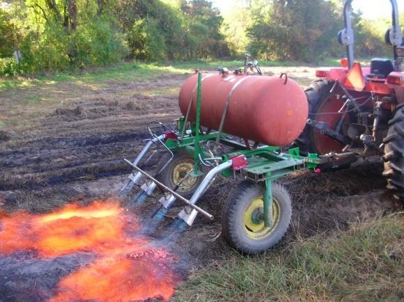 """Лайфхак для виробників органіки: """"вогневий"""" культиватор фото, ілюстрація"""