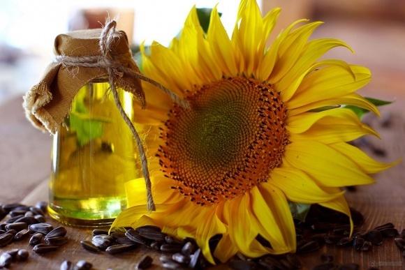 Соняшникова олія: повна орієнтація на експорт фото, ілюстрація