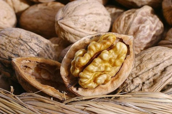 Проблемы ореховой отрасли и способы их решения фото, иллюстрация