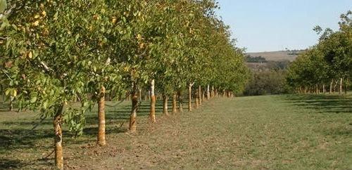 Получат ли садоводы господдержку в рентабельной и перспективной ореховой отрасли? фото, иллюстрация