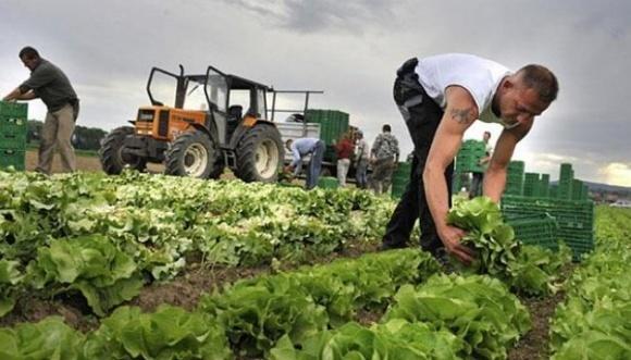 """Кооперація виробників """"органіки"""" дозволить підвищити їхні заробітки на 50-80% фото, ілюстрація"""