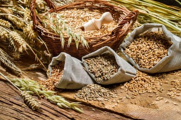 Как влияет колебание температур на качество пшеницы? фото, иллюстрация