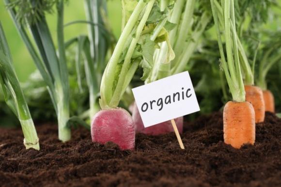 """Хочете купити """"органіку"""" — укладіть договір на майбутній урожай, — експерт фото, ілюстрація"""