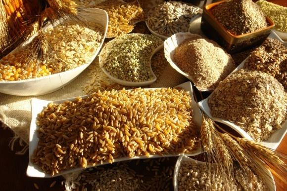 Украина наращивает экспорт органического зерна в ЕС фото, иллюстрация