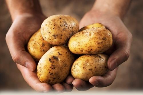 Ціни на картоплю в Україні побили рекордні показники експорту фото, ілюстрація