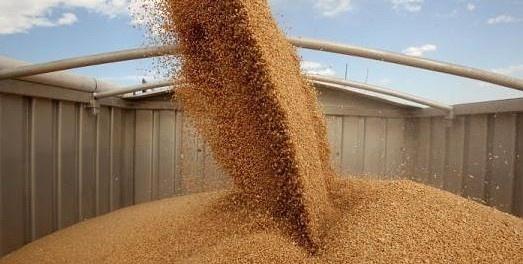 Експорт зерна нового врожаю перевищив 12 мільйонів тонн  фото, ілюстрація