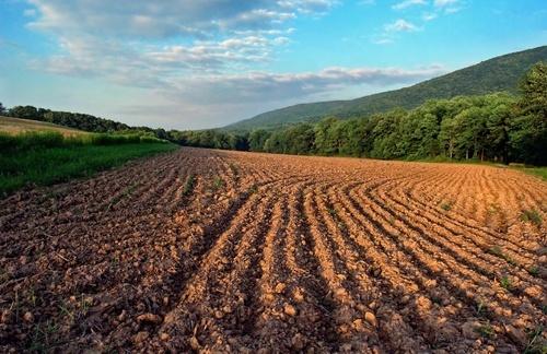 Команда Зеленского поддерживает открытие рынка земли, - Абромавичус фото, иллюстрация
