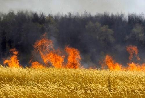 Два поля з пшеницею горіли на Миколаївщині, - ДСНС фото, ілюстрація