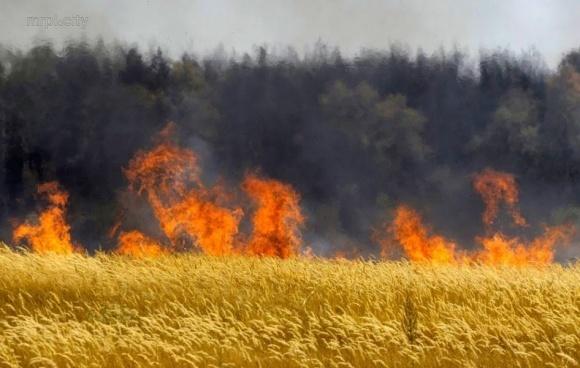 В Запорожской области сгорело 94 га пшеницы фото, иллюстрация