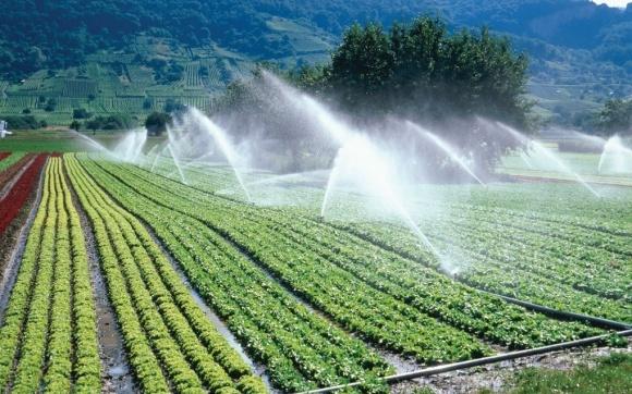 """Агрохолдинг """"Астарта"""" расширил площади под орошение  фото, иллюстрация"""
