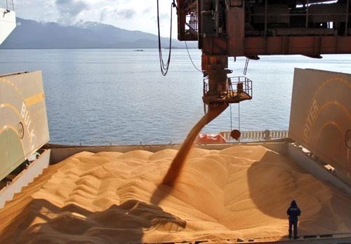 Більше 20 млн тон українського зерна вже надійшло на світовий ринок з початку сезону фото, ілюстрація