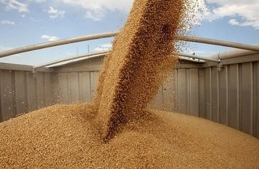 Украина экспортировала рекордный объем кукурузы в Турцию фото, иллюстрация