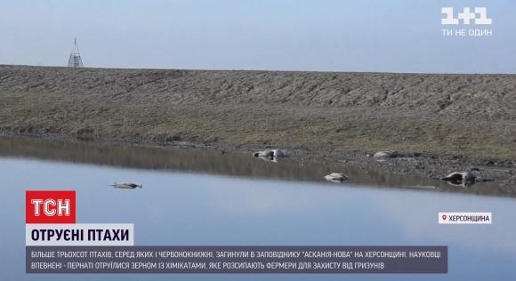 Украине грозит международный скандал из-за массовой гибели краснокнижных птиц в заповеднике «Аскания-Нова» фото, иллюстрация