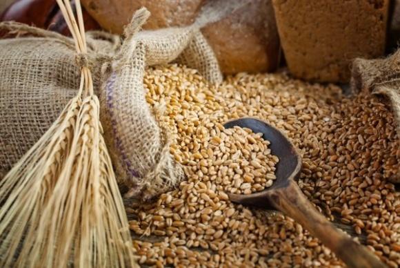 Под овсом сокращены посевные площади и ожидается снижение урожайности фото, иллюстрация