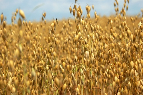 Експорт зернових перевищив 46 мільйонів тон фото, ілюстрація