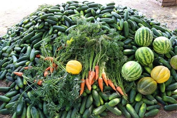 Овощи и ягоды - как действенный вариант диверсификации бизнеса фото, иллюстрация