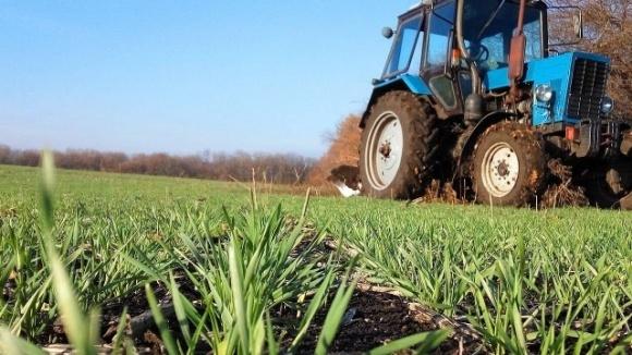 Близько 800 тис. га озимих зернових треба пересівати  фото, ілюстрація