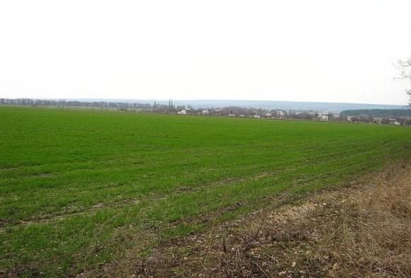 У Запорізькій області через погоду погано проростає озимина  фото, ілюстрація