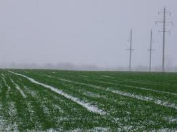 Фітосанітарний стан сільськогосподарських рослин станом на 10 листопада фото, ілюстрація