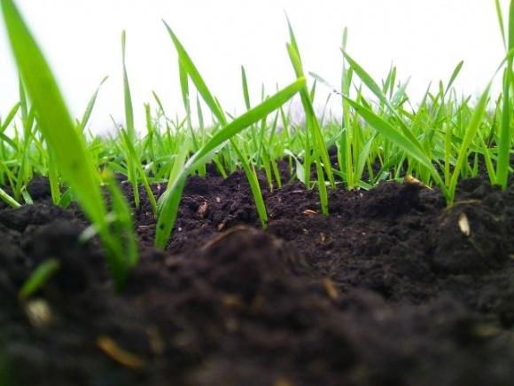 На большей половине площадей увлажнение достаточно для начала осенней вегетации озимых фото, иллюстрация