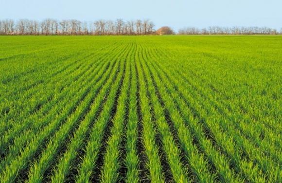 Агрометеорологічні умови в Україні для росту озимих у 1 декаді листопада були сприятливими фото, ілюстрація