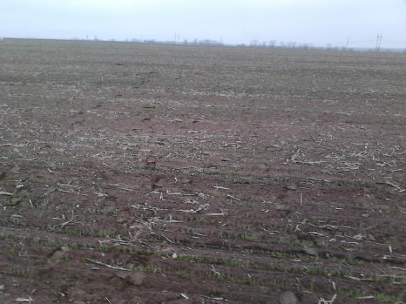 Картина неутешительная — аграрии посчитали убытки от засухи фото, иллюстрация