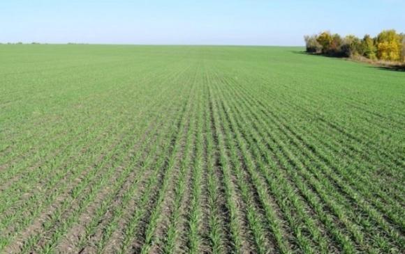 Агрометеорологические условия второй декады сентября в Украине были неоднородными фото, иллюстрация