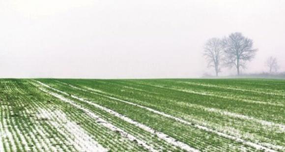 На Ровенщине сложились малоблагоприятные погодные условия для перезимовки озимых сельскохозяйственных культур фото, иллюстрация