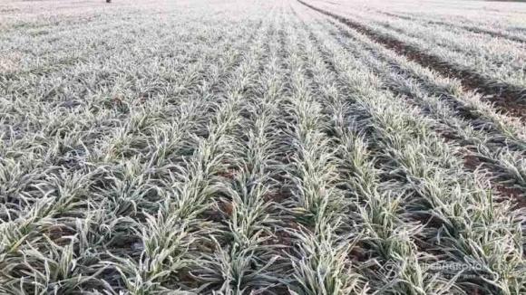 Мартовские морозы не повредили посевы озимых в Украине фото, иллюстрация