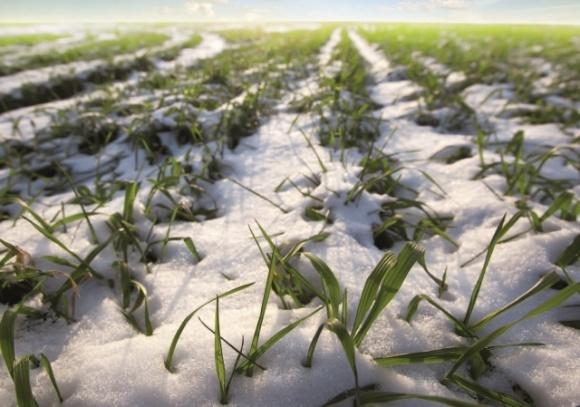 Наблюдается завершение осеннего периода вегетации сельхозкультур фото, иллюстрация