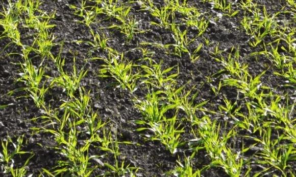 Как теплая зима повлияет на будущий урожай в Украине фото, иллюстрация