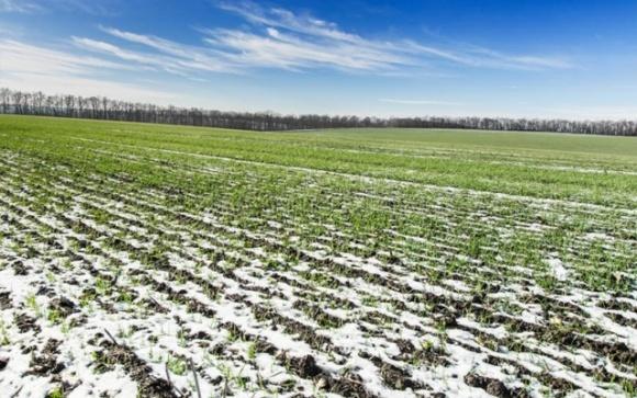 Тепла погода не сприяє перезимівлі озимих, — «УкрАгроКонсалт» фото, ілюстрація