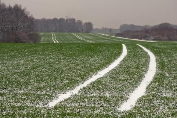Наслідки теплої зими для врожаю: які є загрози для озимих культур фото, ілюстрація