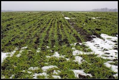 Цены на пшеницу бьют рекорды фото, иллюстрация