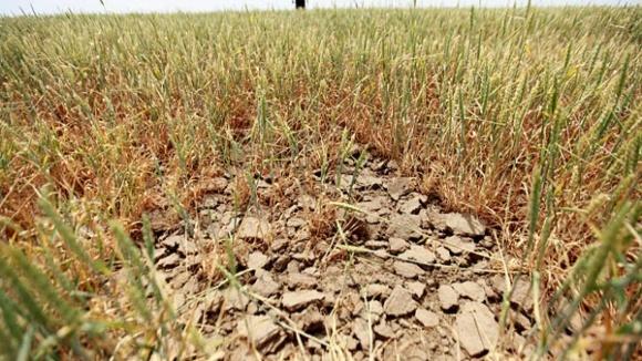 Условия вегетации сельско-хозяйственных культур на фоне засухи ухудшаются фото, иллюстрация