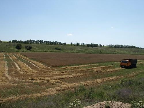Открытие рынка сельхозземель в Украине способно дать необходимые ресурсы для подъема экономики фото, иллюстрация