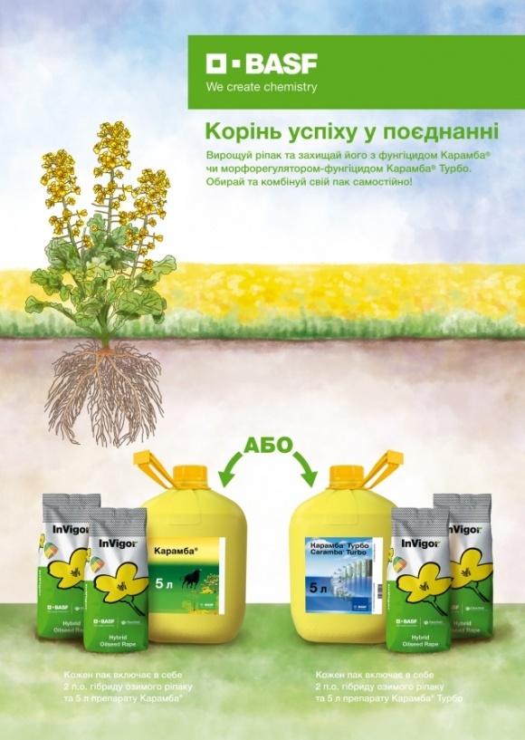 BASF обновил политику продаж семян рапса  фото, иллюстрация