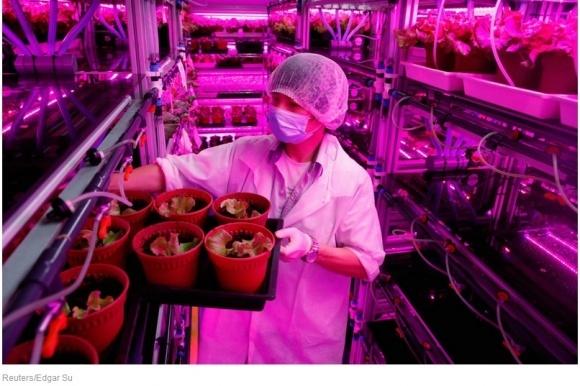 Panasonic завел вертикальную ферму и собирает 80 т урожая ежегодно фото, иллюстрация