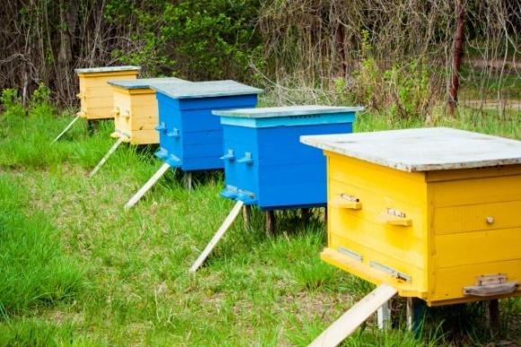 Держава підтримає бджолярів дотаціями фото, ілюстрація