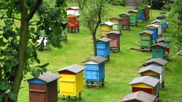 Ціна на мед в цьому році зросте фото, ілюстрація