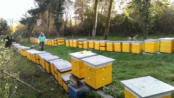 В правительстве объяснили, кто из пчеловодов может претендовать на дотацию фото, иллюстрация