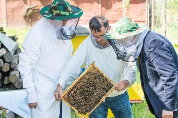С пчеловодами проведут семинары по предотвращению отравления пчел фото, иллюстрация