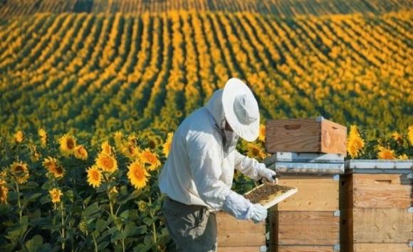 Через користолюбців бджільництво стане нерентабельним фото, ілюстрація